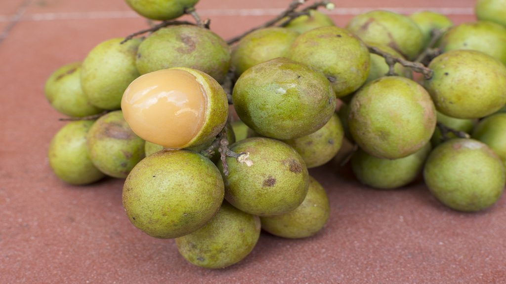 The guinep fruit.
