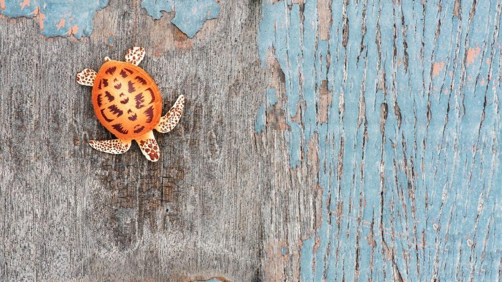 A turtle via iStock.