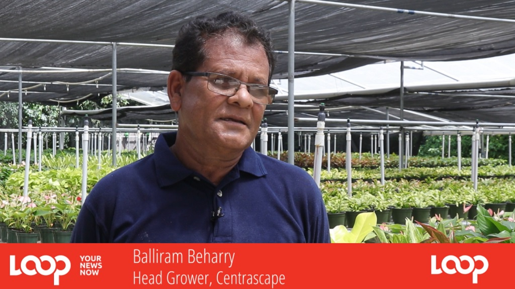Photo: Balliram Beharry, Director and Head Grower at Centrascape Garden Centre.