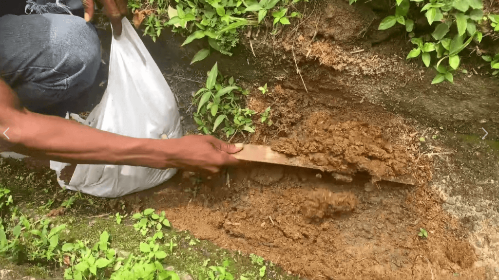 Photo: A sample of the bachac manure is taken, image taken from video.