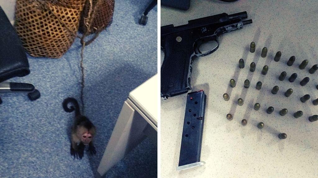 Police seize 6 monkeys, firearm: Trinis, Venezuelans held