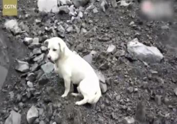 Un chien attend son maître enseveli sous l'éboulement géant en Chine. Capture d'écran