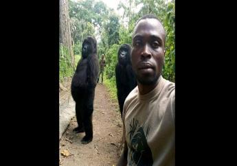 The photograph was taken by park ranger Mathieu Shamavuat the Virunga National Park in DR Congo.