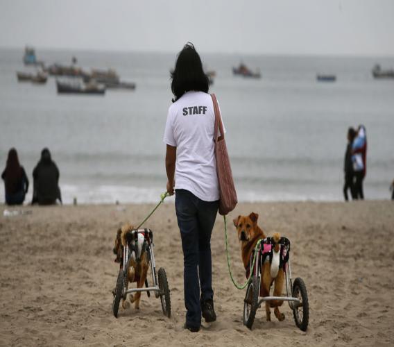 Mensen met een hond liepen een kleiner risico op hart- en vaatziekten.