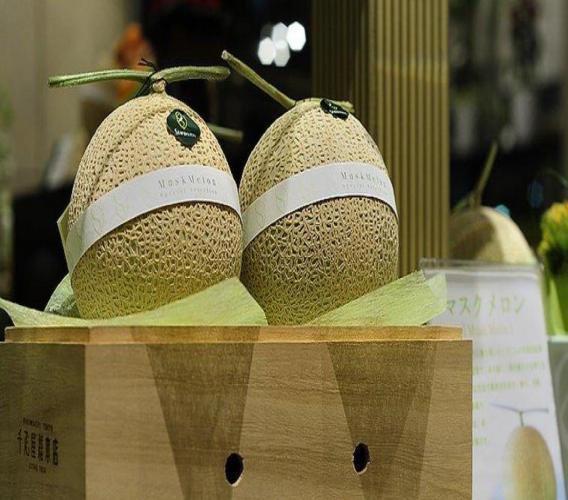 Deux melons Yubari, fruit très prisé au Japon, se sont vendus pour la somme record de 3,2 millions de yens (plus de 25.000 euros) samedi lors d'enchères à Sapporo sur l'île de Hokkaido (nord), ont annoncé des responsables. (Crédit photo :AFP)