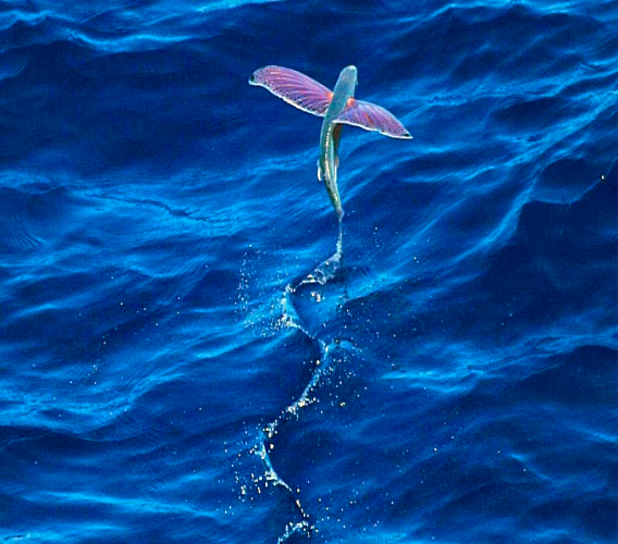 Photo via Wikipedia/ the US National Oceanic and Atmospheric Administration.