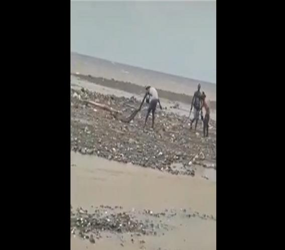Screengrab of a video showing a group of men attempting to capture a crocodile.