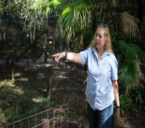 In this July 20, 2017, file photo, Carole Baskin, founder of Big Cat Rescue, walks the property near Tampa, Fla.  (Loren Elliott/Tampa Bay Times via AP, File)