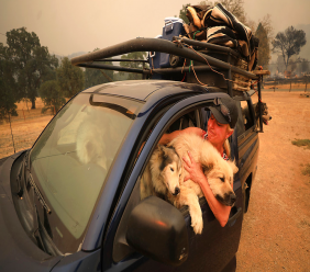 Crystal Easter, of Spring Valley, comforts her dogs, Monday, Aug. 6, 2018, in Spring Valley, Calif., as they flee a wildfire. This is the second time this year Easter has had to evacuate. (Kent Porter/The Press Democrat via AP)