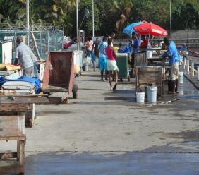 Fish vending at the Vieux-Fort Fishing Port