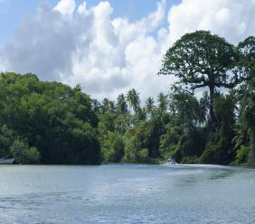 Photos: The Nariva Swamp. Photo courtesy Getty Images.