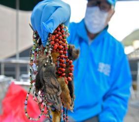 Un employé du secrétariat colombien à l'Environnement montre des colliers fabriqués avec des membres de singes, à Bogota le 12 septembre 2019 AFP - RAUL ARBOLEDA
