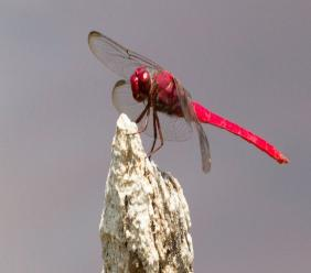 """The  dragonfly   looks  like he  is  asking us  to  be  patient  and  hang in  there,"" says photographer, Helen Jones"