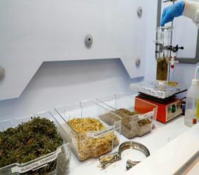 Photo prise le 8 juillet 2020 d'un laboratoire dans l'université de Tel-Aviv, en Israël, où la scientifique Hadas Mamane produit de l'éthanol à partir de déchets végétaux JACK GUEZ AFP