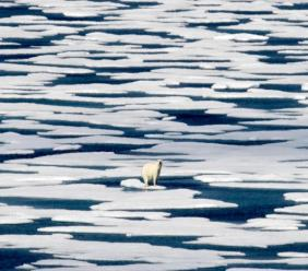 In this Saturday, July 22, 2017, file photo, a polar bear stands on the ice in the Franklin Strait in the Canadian Arctic Archipelago. (AP Photo/David Goldman, File)