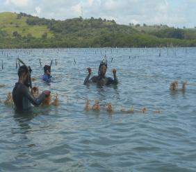 Sea moss farmers