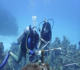 CCMI conducting reef surveys in August 2020; Image source: CCMI