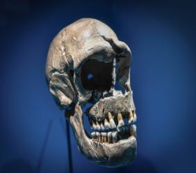 Les malades du Covid-19 portant un segment d'ADN de Neanderthal, hérité d'un croisement avec le génome humain il y a quelques 60.000 ans, sont plus à risques de complications sévères de la maladie, selon des chercheurs