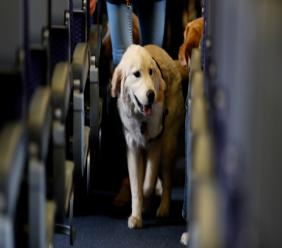 In this April 1, 2017 file photo, a service dog strolls through the isle inside a United Airlines plane at Newark Liberty International Airport while taking part in a training exercise in Newark, New Jersey. Photo: AP Photo/Julio Cortez/ File