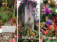 T&T, Grenada and Barbados have all won gold medals at the Chelsea Flower Show.