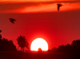 Birds fly by as the sun rises in Frankfurt, Germany, Monday, June 24, 2019. Germany expects hot temperatures during the next days. (AP Photo/Michael Probst)