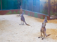 Photo courtesy the Emperor Valley Zoo.