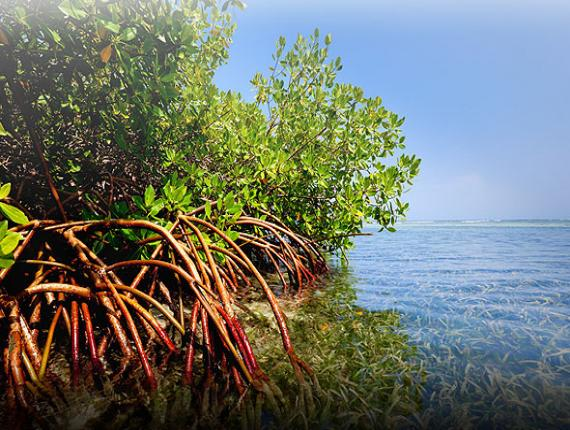 Image source: Cayman National Trust