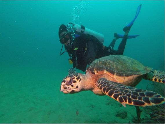 Loop contributor, Aisha Sylvester, with a hawksbill turtle at Flying Reef. (via: Undersea Tobago)