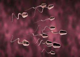 Meermaals per maand klaarkomen houdt sperma gezond en helpt kanker vermijden.