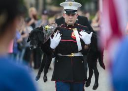 U.S. Marine veteran Lance Cpl. Jeff DeYoung carries Cena a 10-year-old black lab who was a military service dog, aboard the LST 393 where he was put down on Wednesday, July 26, 2017 in Muskegon, Mich. Cena was diagnosed with an aggressive form of bone cancer after DeYoung noticed he wasn't putting weight on his front left leg.