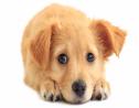 Puppies help